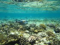 Fish & coral