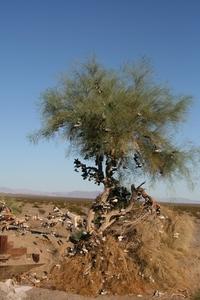 Joshua Tree pictures
