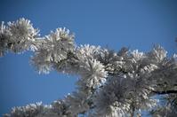 Fir Tree Frost 2