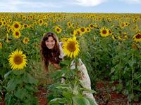 Sunflower plantation