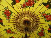 Thai Umbrellas