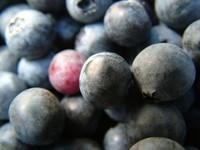 Ummm Berries