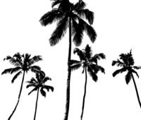 Vector Palm Tree Silhouete