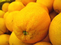 Vegi Goodness - Oranges