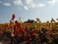 Beaujolais Landscape France near Lyon