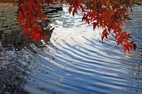Autumnal ripples