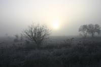 Foggy dawn 1