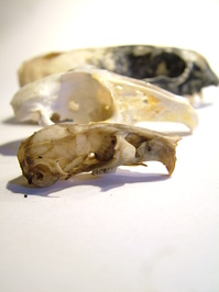 skullz 2