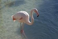 Pink Flamingo 1
