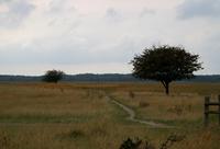 Autumn in the fields.