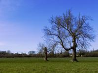 Tree and Minitree