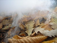 dust n leaf