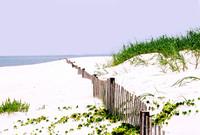 The Beach (Color)