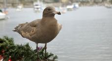Balboa Bird