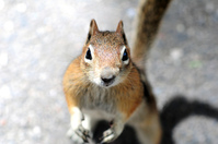A Hungry Chipmunk