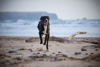 Dog on the beach 2