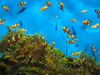 Aquarium - Cape Town 3