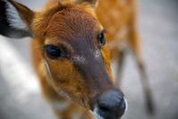 Bambi, i think