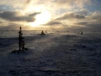 Tundra Morning