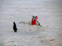 Camel trip