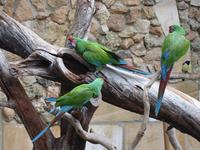 Parrots story 2