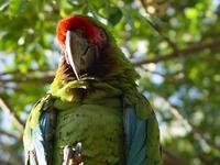 the colourfull parot