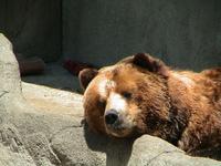 Zoo trip 1