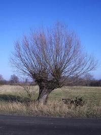 Sentimental tree