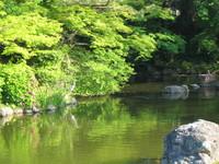 Heron on Japanese pond