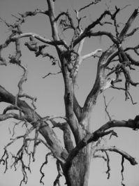 Gothic Tree 1