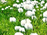 fleurs barbapapa 2