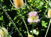 prickly plant 2010