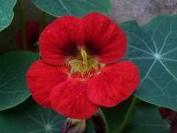 Flower 100