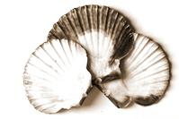 Shells B&W