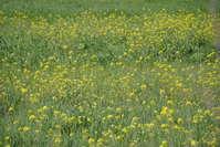 yellow wildflowers meadow