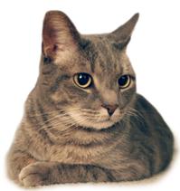 critter cat