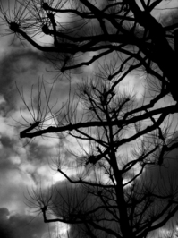 Bare Trees 4