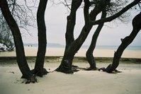 Beach with trees near Gdansk