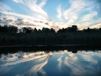 nature around the lake 5