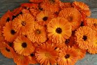 Organic marigold 4
