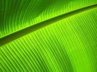 leafy 2