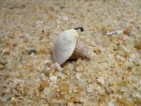 Sea Shells 2