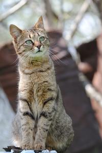 Feral cat Maya 3