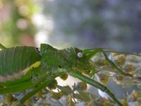Insecte 22