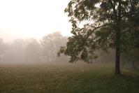 Sunrise: Trees
