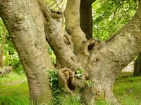Tree Anatomy 1