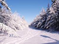 Beauty of snow 1