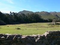 rural grass paddock