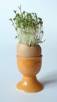 Easter Egg with cress
