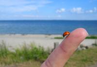 Ladybird takes a rest